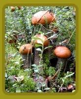 Фото - грибы и грибники