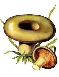 толстушки фото грибы
