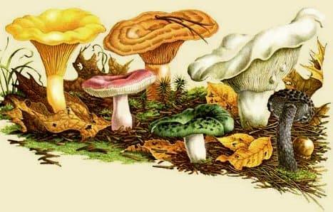 грибы и грибники ульяновска форум