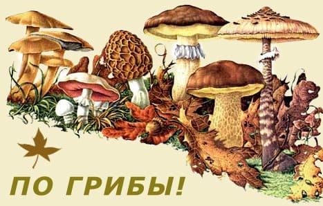 Грибы и грибники, Форум, определитель, описание с фото, рецепты
