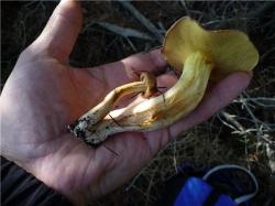 Конец грибного сезона