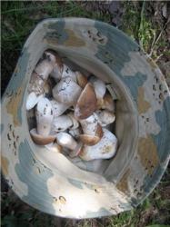 Шляпа белых грибов