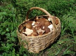 Корзинка белых грибов