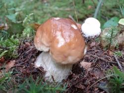Белый гриб - многоэтажка