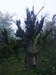 Деревище!
