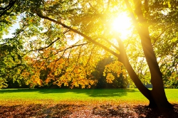 Неяркое солнце осени