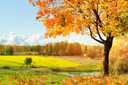 Последняя осень...
