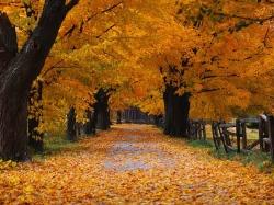 Осень от Windows