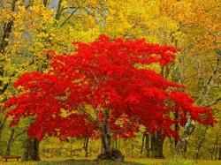 Дерево в Красном от Avon