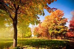 Осенняя пора, очей...