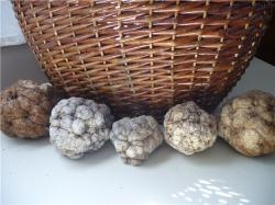 А грибы-то - каменные
