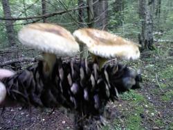 Забавные грибочки - Нашли место