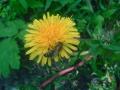 Весна в Святогорье