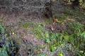 Грибная поляна - боровички