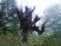 Деревище