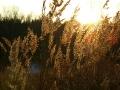 Вот таким бывает золотой осенний ветер