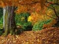 Осень Средиземья: Онты? Ау!