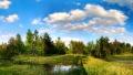 Летний пейзаж - Опушка