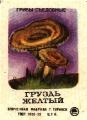 Гриб груздь желтый