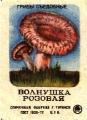 Гриб Волнушка розовая