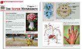 The Super Mushroom