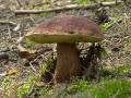 Белый гриб стар