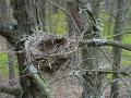 Опустело гнездо