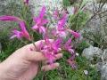 Цветы на ладони