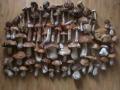 Итоги похода по-грибы