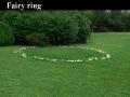 Ведьмин круг грибов