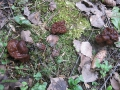 Строчки в сосновом лесу