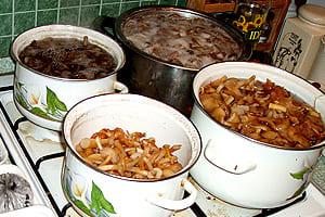 Грибы Приготовление грибов Заготовка грибов Сушка