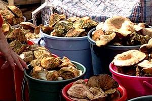 Соленые грибы - засолка, рецепты, Способы засолки грибов, Грибы соленые